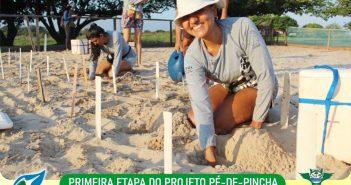 Mais de 800 ninhos de quelônios já foram plantados este ano na Fazenda Aliança